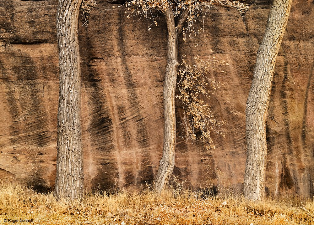 Three Trees, Canyon de Chelly, AZ